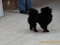 стрижка маленьких собак