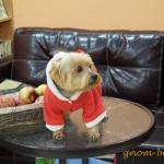стрижка собак - зоосалон ГНОМ