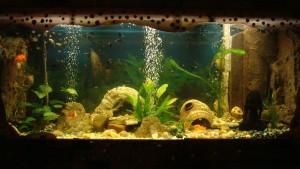 аква2
