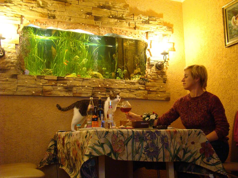 …Кот в перерыве между ловлей рыбы и издевательством над псом!